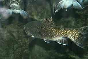 Nerger GbR aus Sanitz erhält Förderung zum Bau einer Aquakultur